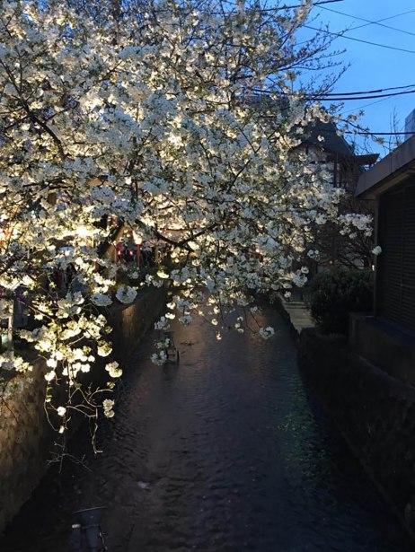 Blossom1000
